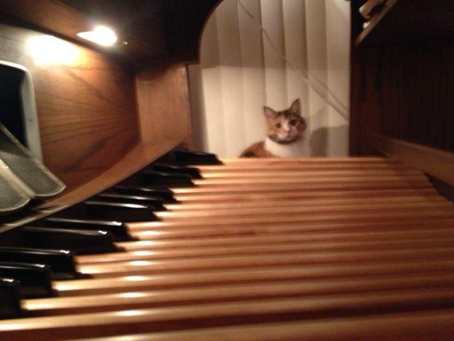 My cat Kilala looking down the organ pedals.
