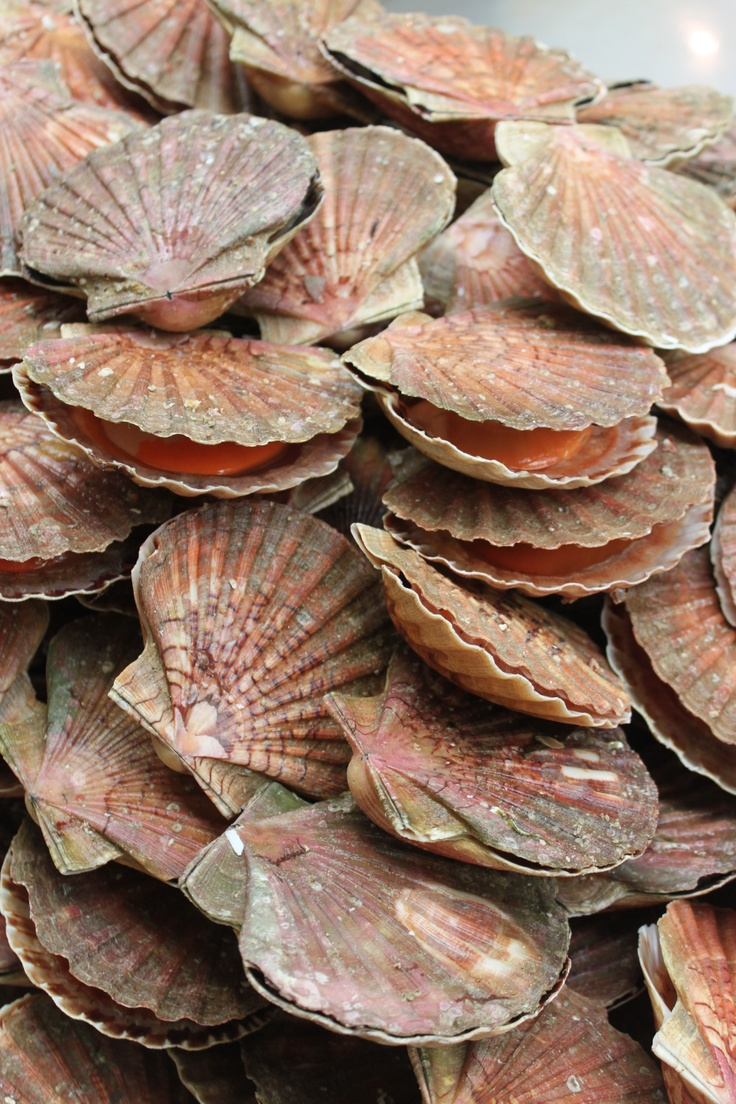Scallops on the shell (coquilles saint jacques).....worth the trip...one of my faves and I will cook them for you a la julia child....YUM!
