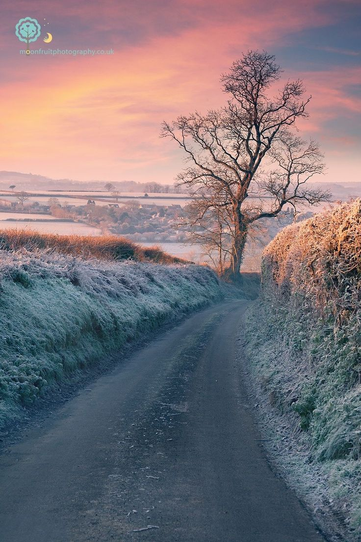December dawn (Somerset, England) by Sarah Brooks cr.c.