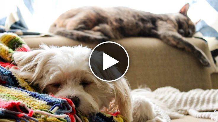 Mysigt med husdjur i soffan – men hjälp vad mycket hår det blir...