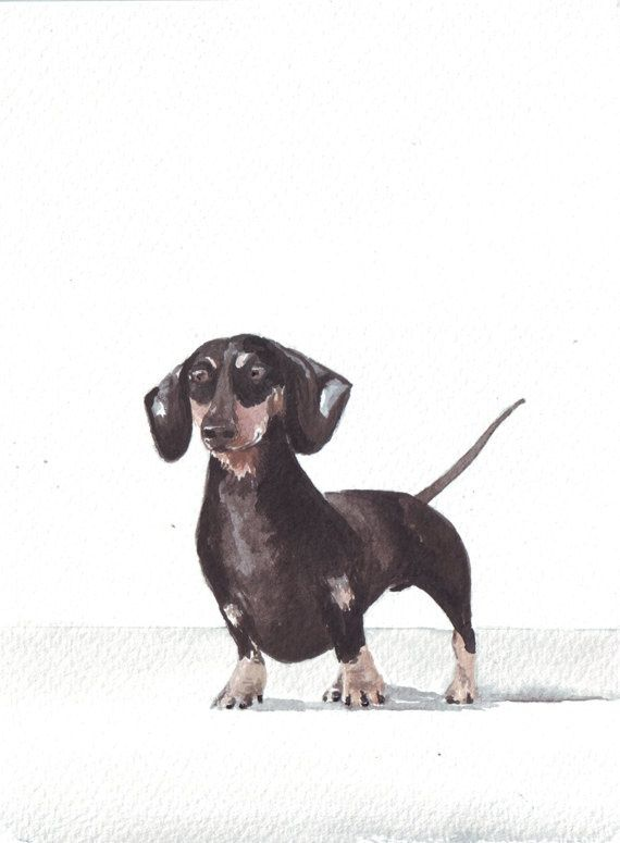 17 Best Ideas About Dachshund Drawing On Pinterest