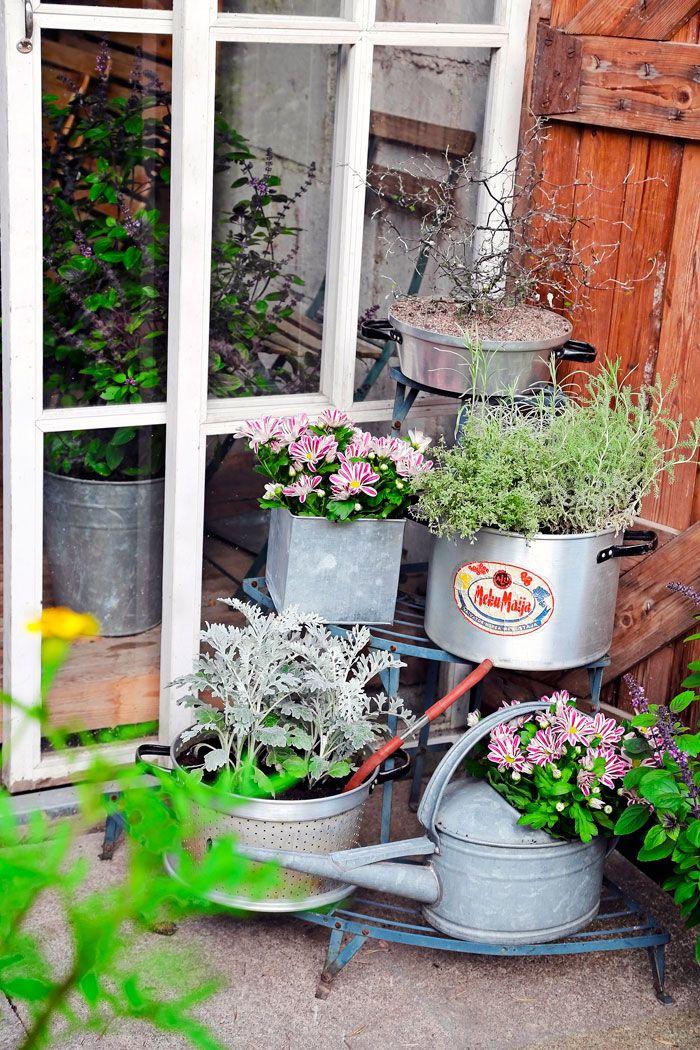 Ota vanha mehumaija uusiokäyttöön ja perusta siihen hopeanhohtoinen kukka-asetelma. Teksti ja kuvat Teija Tuisku www.viherpiha.fi