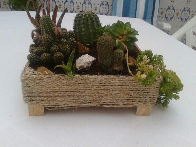 37 best las plantas de mi patio images on Pinterest   Patios ...