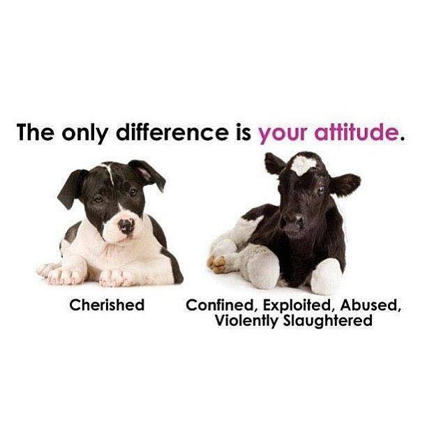 It is not ok to finance cruelty; go #vegan