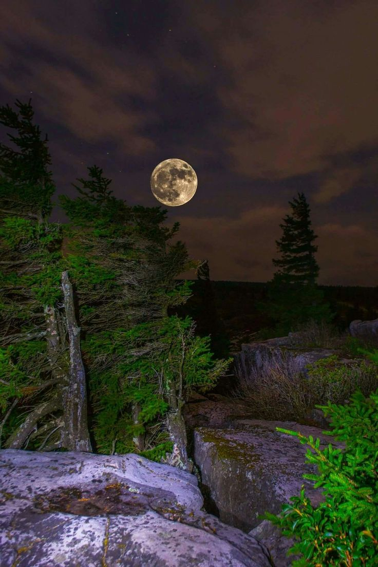 Super Moon over Dolly Sods