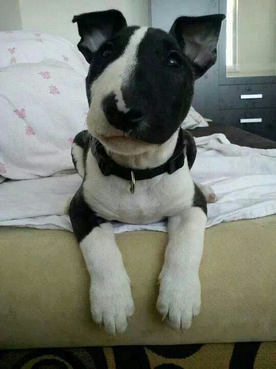 #Bullie #pup