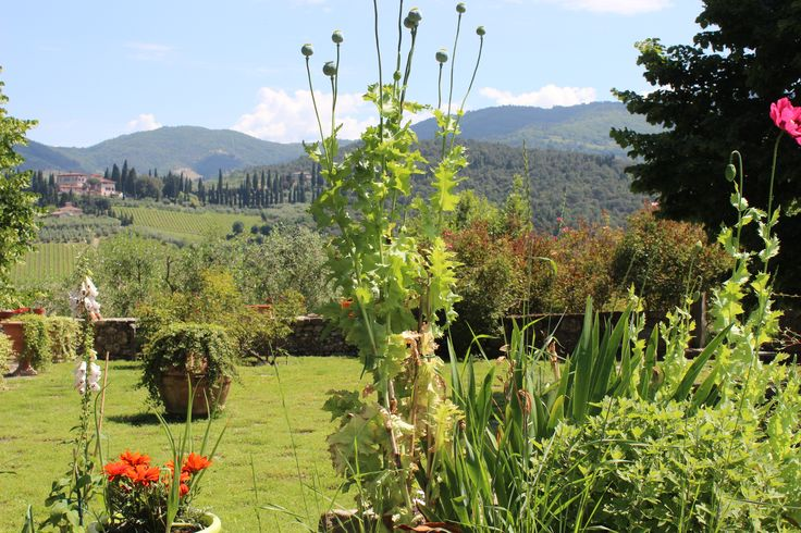 The view from the garden