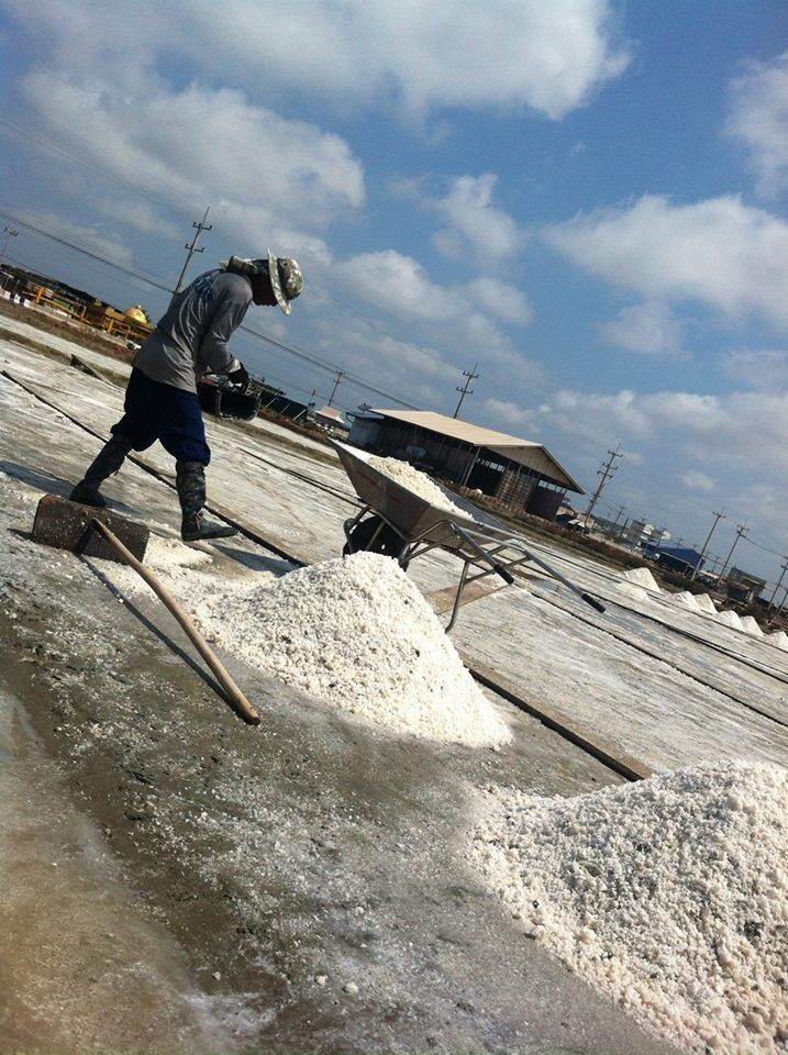 Salt farm : on the way tour this week you will see all the farmer take up salt. www.chilipastetour.com