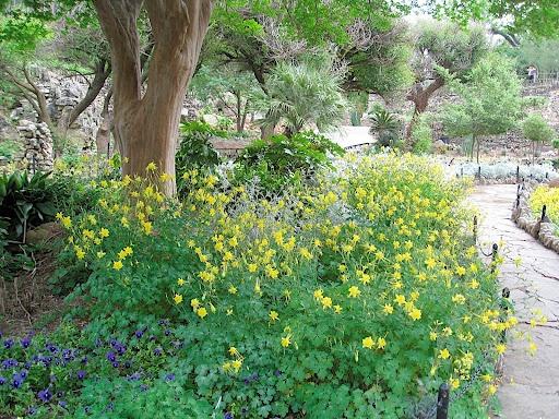 texas shade garden