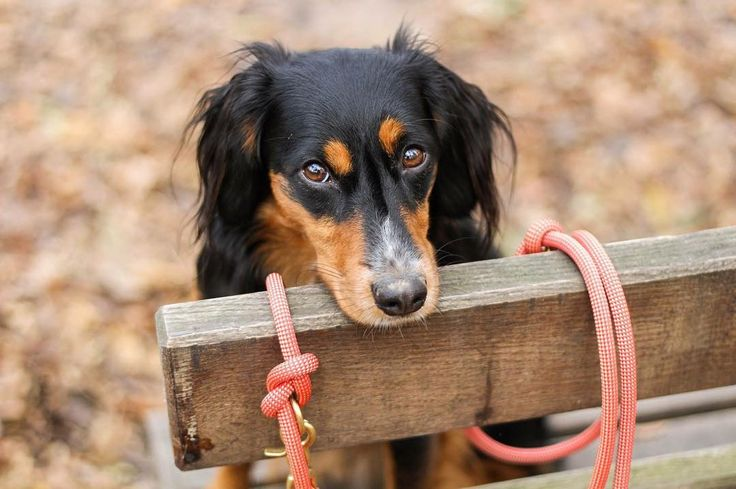 "isartau på Instagram: ""#mondaymood Can we go back to Friday? Cute pic by @nala.dagoberta 💕 www.isartau.de - munichmade dog leashes | manufactured with love…"""