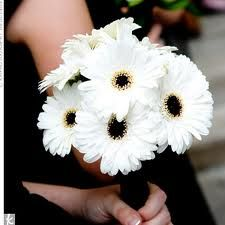 black and white gerbera daisies called 'Ave Maria.' A decent substitute for out of season anemones.