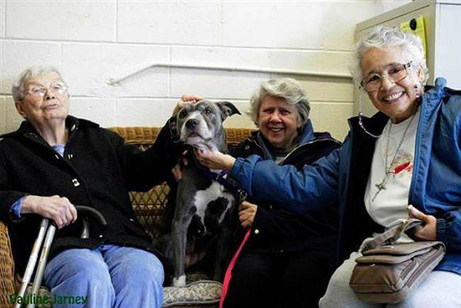 nuns adopt pit bull