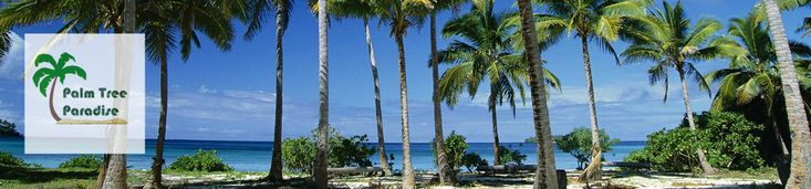 Palm Trees For Sale Online