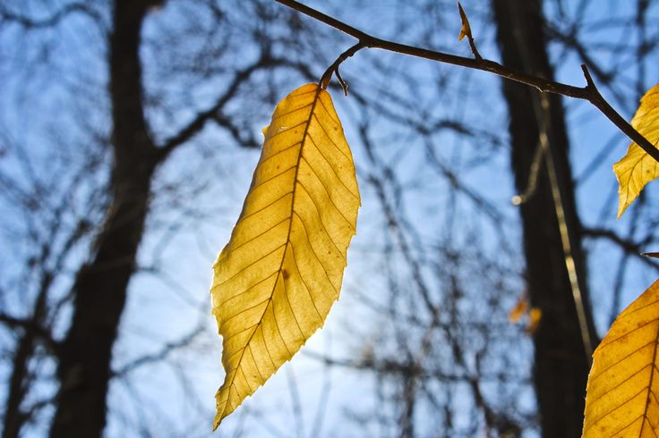 I'm a leaf drifting with the wind but not all who wander are lost.