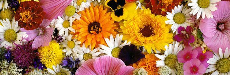 Saiba como montar uma floricultura online. Veja algumas dicas sobre como montar uma floricultura na Internet. Fatores a serem observados na loja virtual.