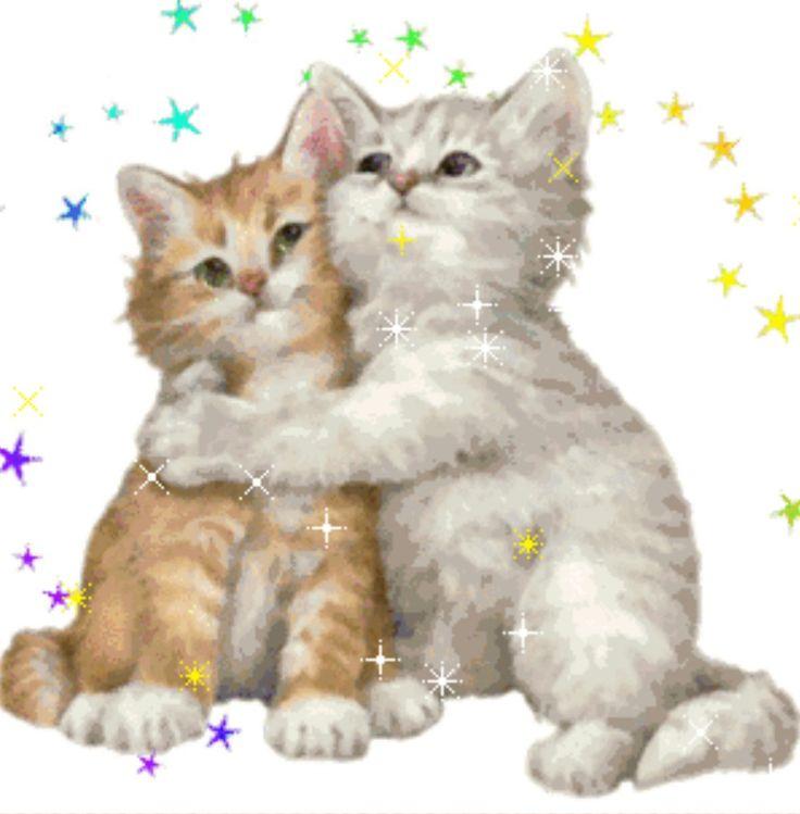 открытки с кошками обнимаю естественной среде растет