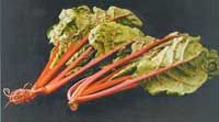 Swiss chard   The leaf vegetable that keeps on giving!     By Raymond Nones