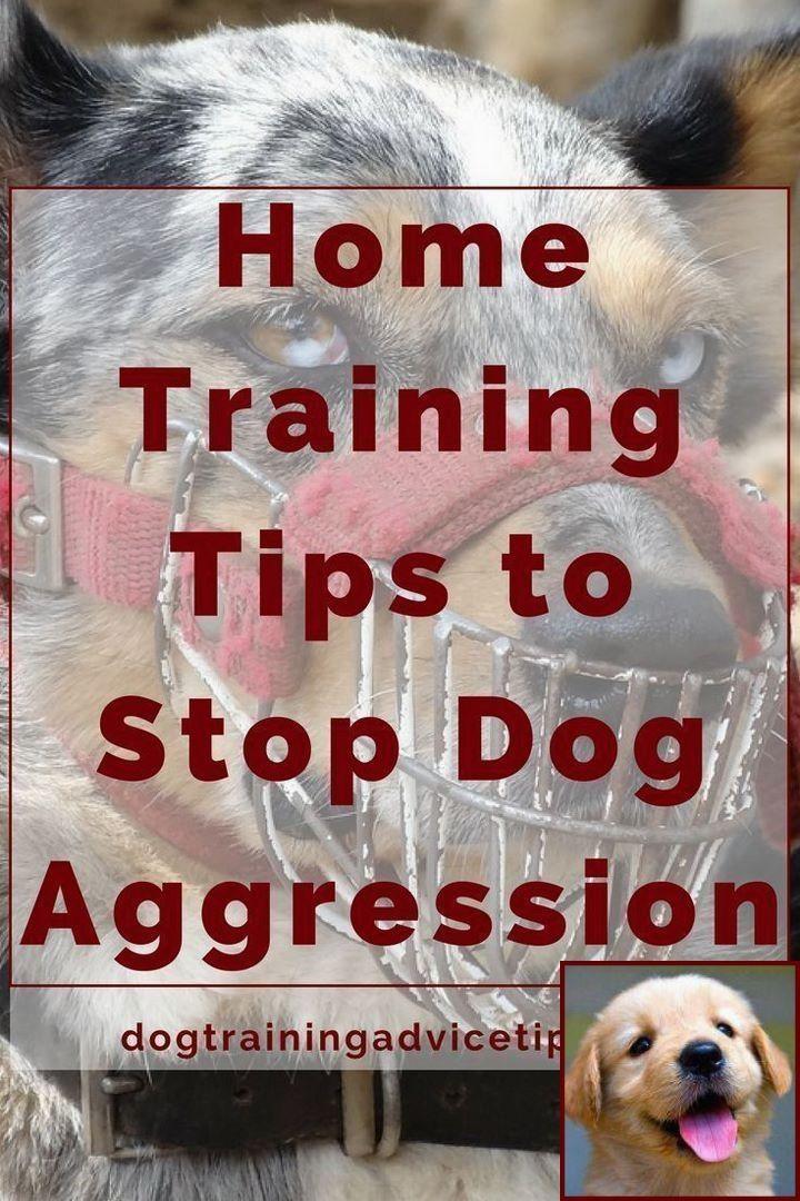 Dog Behavior After Quarantine And Clicker Dog Training Petsmart