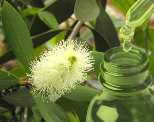 Αιθέριο Έλαιο Λευκόδεντρου