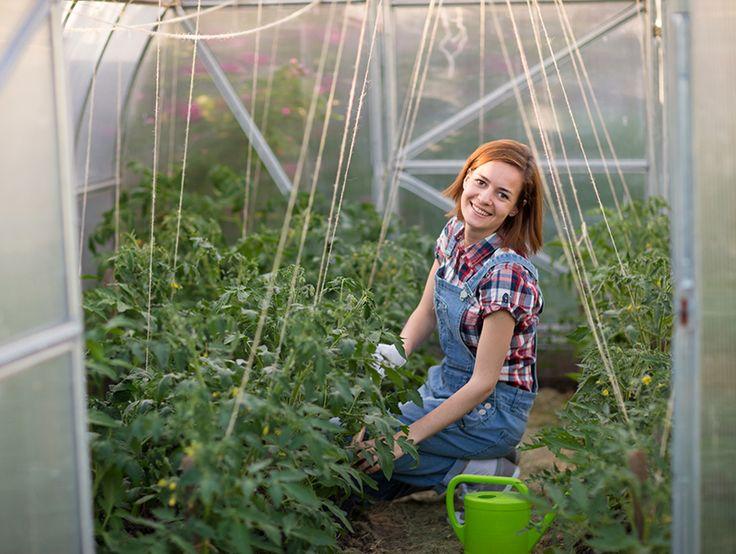372 Best Urban Farming. Images On Pinterest | Urban Farming, Urban  Agriculture And Urban Gardening