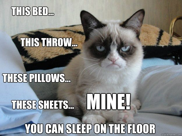 Grumpy Cat confiscates the bed... *