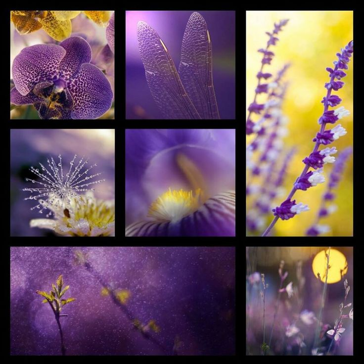 Inspiratie pe violet si galben #inspiration #colors #moodboard #collage