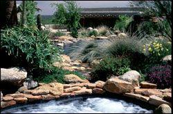 List of AZ Pool Friendly plants