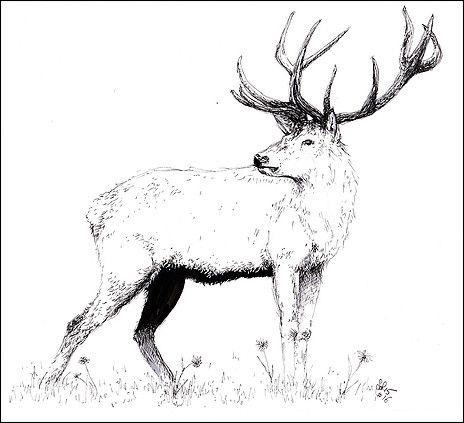 Les 90 meilleures images propos de dessins sur pinterest - Dessin bois de cerf ...