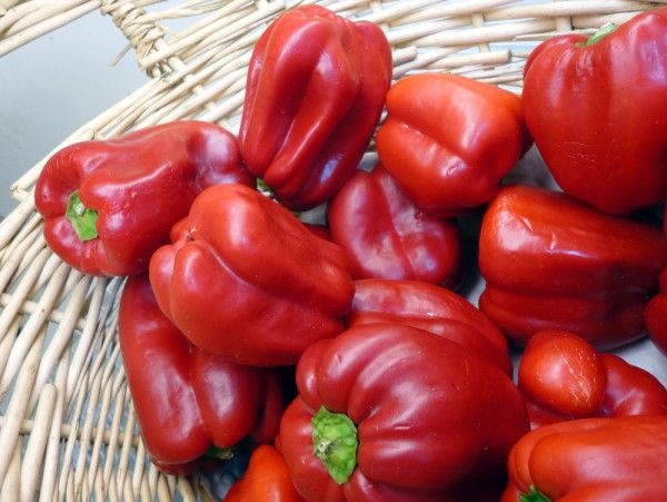 Gregorio's Mays Landing Market has produce every day! Check out the color of these red peppers.