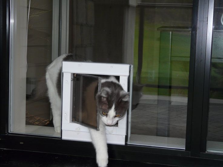 Decorating sliding glass cat door : 17 Best images about Cat flap stuff on Pinterest | Cats, The very ...
