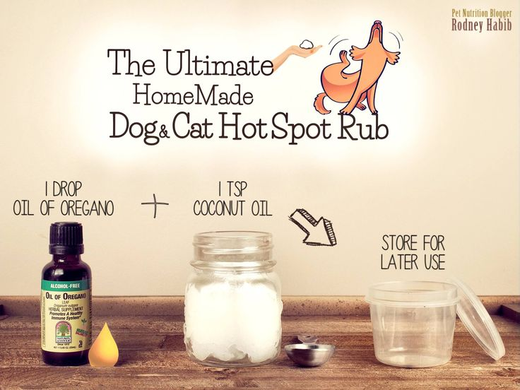 HOMEMADE OREGANO & COCONUT OIL HOT SPOT CREAM  Spring is here and so are the increased risks of itchy skin, rashes, welts, bug bites and hot spots that may plague your pets!  Looking for a natural alternative to antibiotics?  Introducing the antifungal, antibacterial, antimicrobial, antiviral, and antiparasitic doggie & kitty rub!