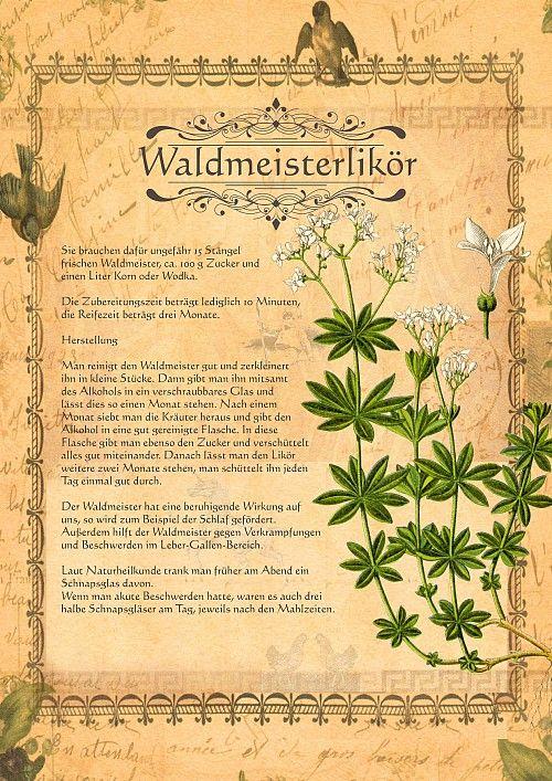 www.kraeuter-verzeichnis.de Heilwein-Heilschnaps ein-waldmeisterlikoer-amp.shtml