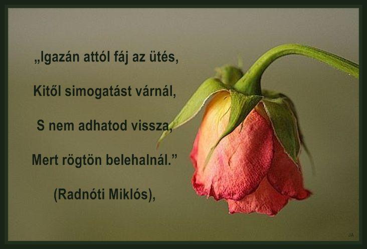 ...Hála, 16---66,Az élet..., Szerelem,...igazság.., Hol voltál?,ez is igaz..., Talán kellene.., Igazságok...., Tégy meg minden jót...., - bozsanyinemanyi Blogja - Gyurkovics Tibor, Képre írva...., Ágai Ágnes versei, BÚÉK!, Devecseri Gábor versei, Faludy György, Farkas Éva versei, Film., Gondolatok......., Gősi Vali-versei, Grigó Zoltán versei, Idézetek II, Játék!, Jókai Mór, Kamarás Klára versei, Kétkeréken!, Mikszáth Kálmán, Móricz Zsigmond, Szíj Melinda verse, Virágok, Általános II…
