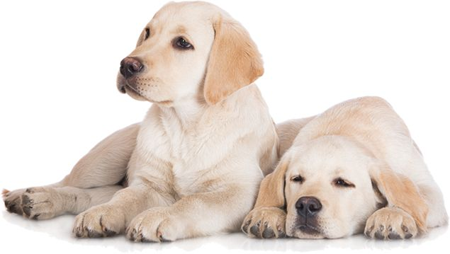 Natural Ways To Calm Separation Anxiety In Dogs
