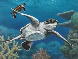 sea animals paintings – Google Search