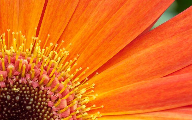 Orange Flower Desktop Background Wallpapers Hd Free 2560x1600px Orange Flower Desktop Background Wallpapers Hd Free 2560x1600px