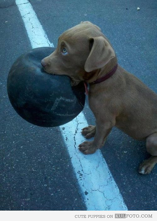 Puppy wants to play basketball