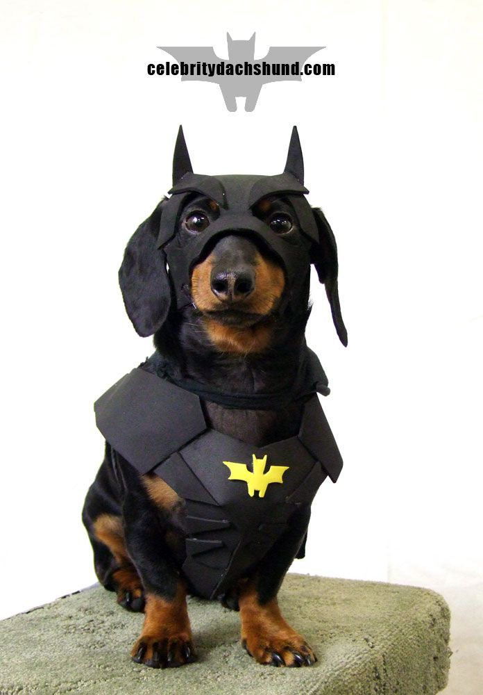 Dachshund Halloween Costumes & Contest Results | Crusoe Dachshund