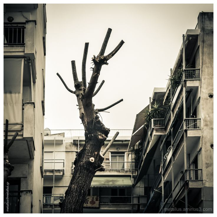 """Seeking for Space""  A tree at Thessaloniki, Greece"