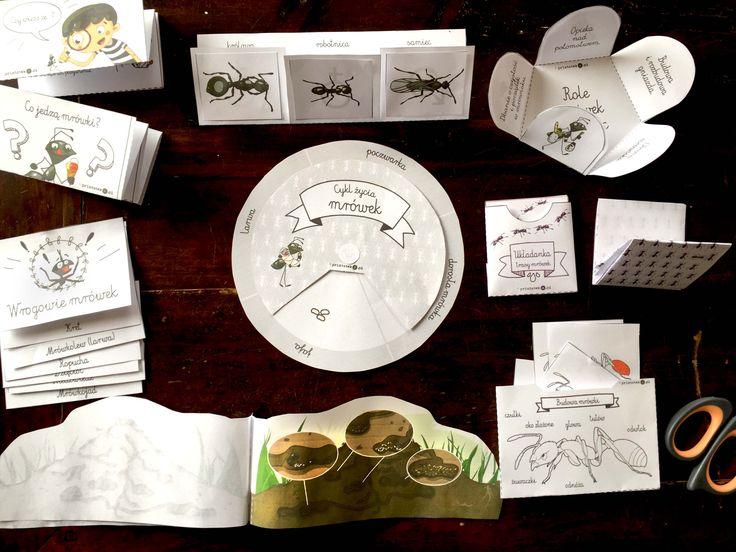 mrówki, ants, lapbook