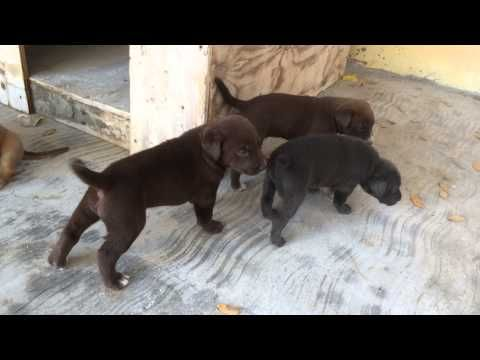 Watch Kiki S Puppies Have Started Walking And Exploring Ifaw