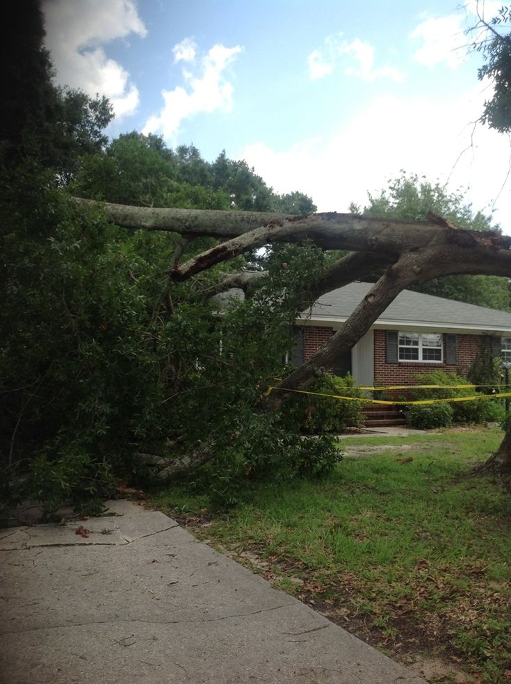 Navarre tree removal services tree removal tree removal