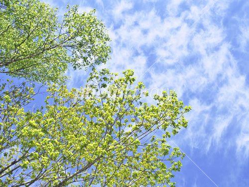 新緑と青空-写真素材