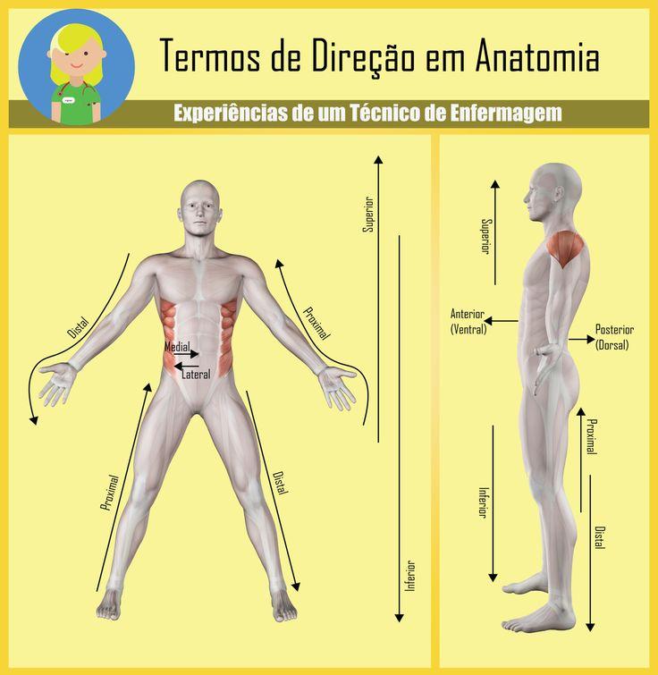 posicaoanatomica.png