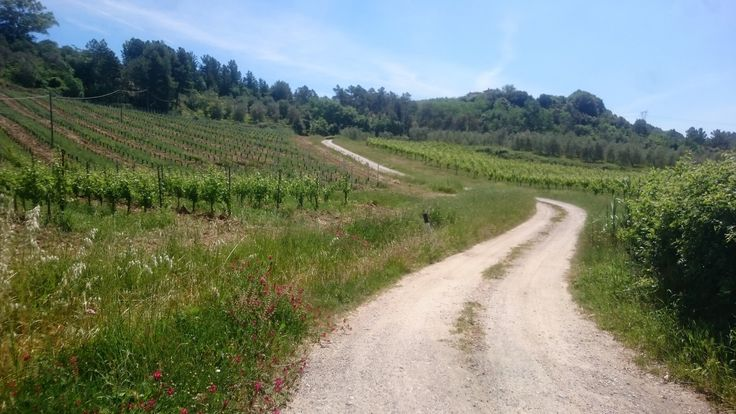 The Trekking path just outside Borgo La Casaccia