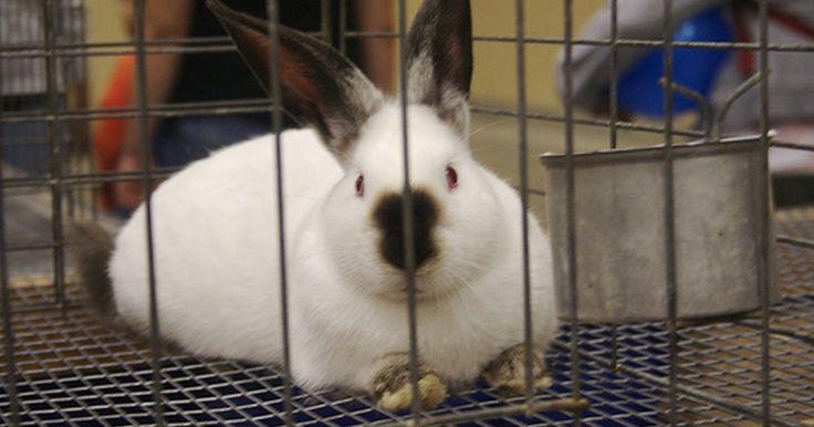Cómo construir jaulas de interior para conejos. Si estás pensando en tener a tus conejos adentro todo el año como parte de tu familia, necesitas construir una jaula de interior. La mayoría de las jaulas son de un solo piso y rectangulares. Ya que los conejos pueden aprender a usar una litera, haz tu jaula lo suficientemente grande como para que entre una pequeña caja y que haya un área para ...