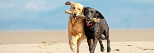 Dog Friendly Beaches North Devon | Woolacombe Westward Ho Saunton Croyde Instow Blue Flag | Smythen Farm Holiday Cottages