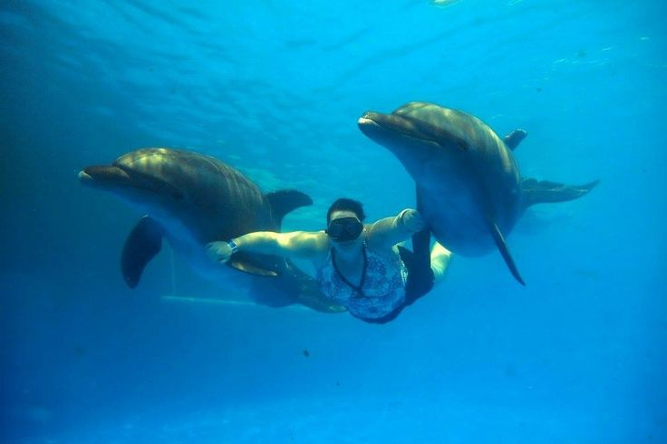 Two dolphin swim, what an amazing time: