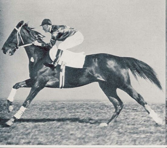 "Phar Lap -- ""The Red Terror"""