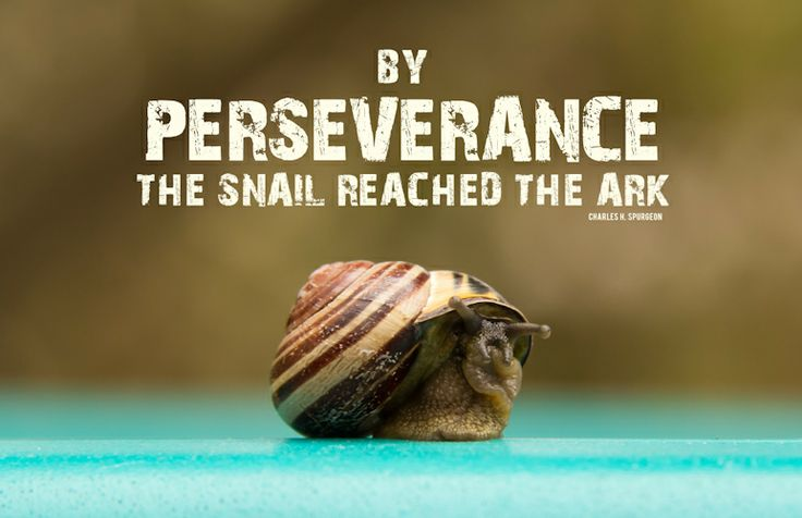by perseverance the snail reached the ark charles